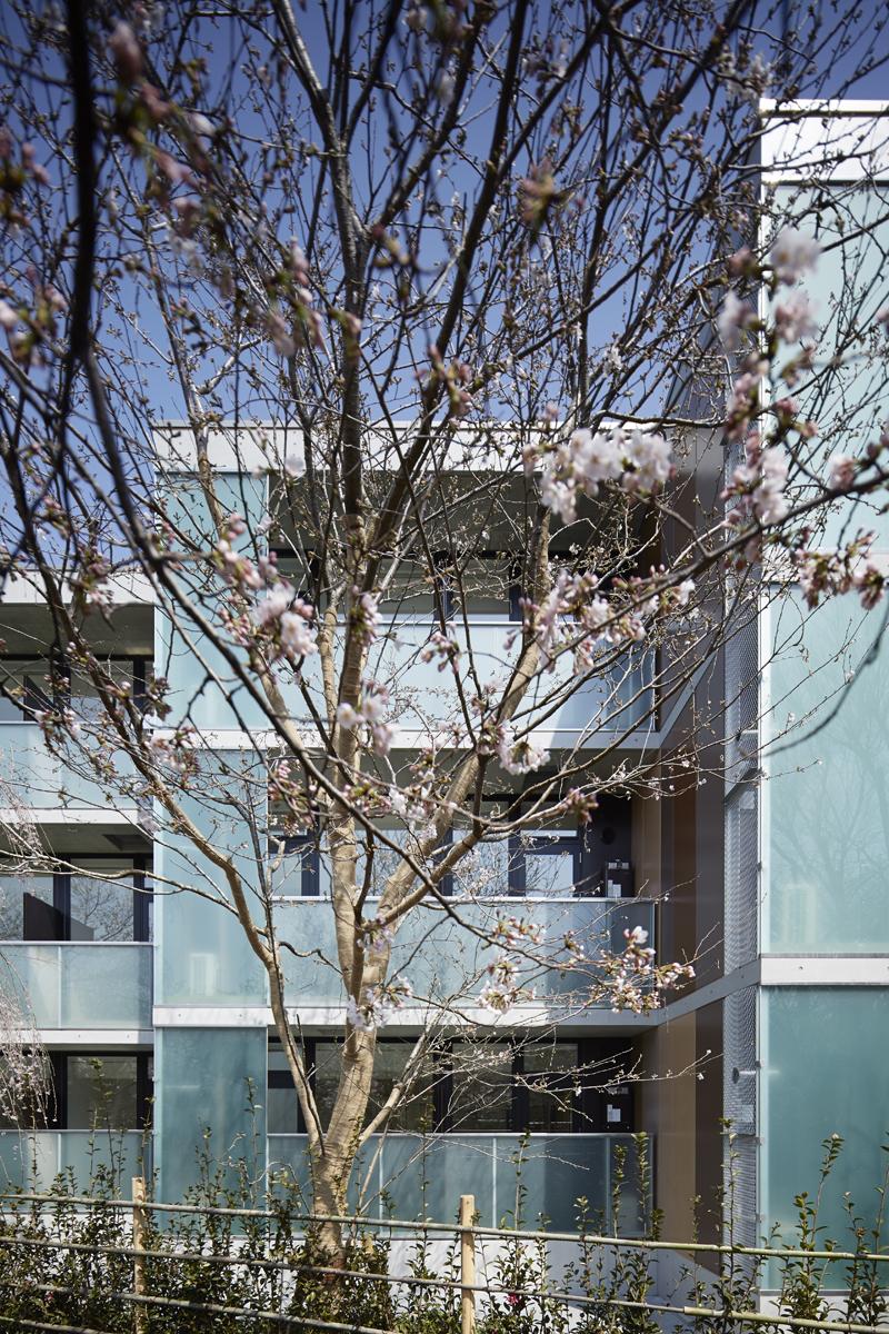公園からの眺め 実際の植栽は緑化計画に基づいて行われ石神井川の桜並木呼応して敷地内にも樹高6mのシダレザクラとソメイヨシノを交互に列植します。 お施主様が町並みに貢献できる緑化計画をお考えになられています。 石神井川沿いの桜並木の緑道に、さらに桜をたせるようにして、石神井川沿いの桜の見所のひとつと思っていただけるよう考えいます。