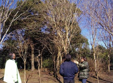 植栽工事 樹木見学会 樹木見学会