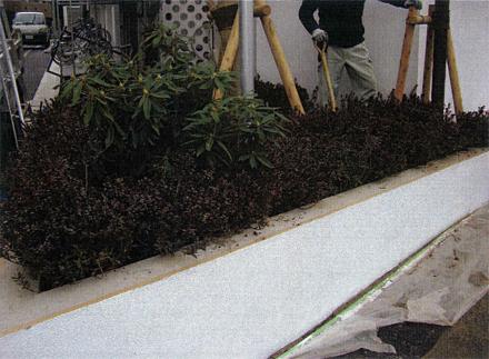 植栽工事 低木:サツキ 施工状況