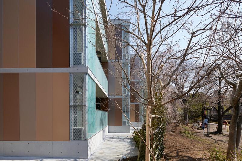 石神井川緑道公園と一体化した敷地内のサザンカ生垣とシダレザクラとソメイヨシノを列植した桜並木